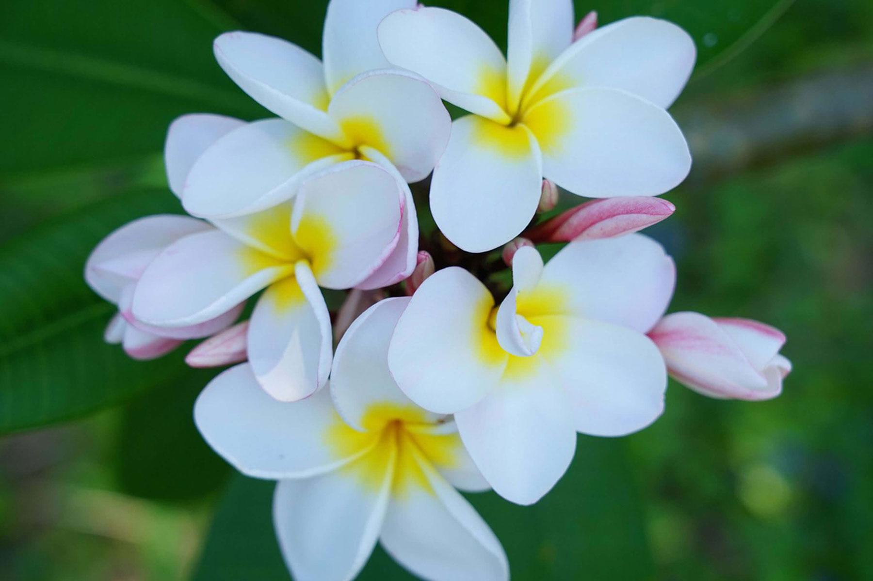ホテル内には南国ならではの花々が咲いています